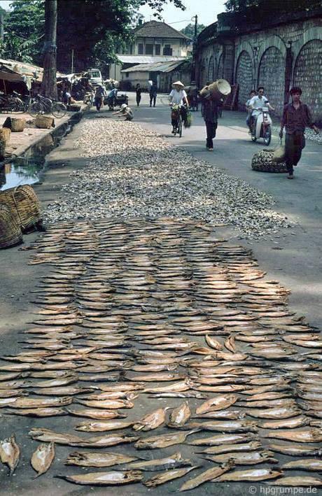 Sušení ryb na ulici