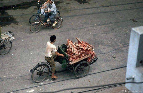 Levným a hodně používaným prostředkem pro dopravu zboží bylo právě xích lô