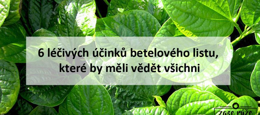 6 léčivých účinků listu betelu (Lá lốt)